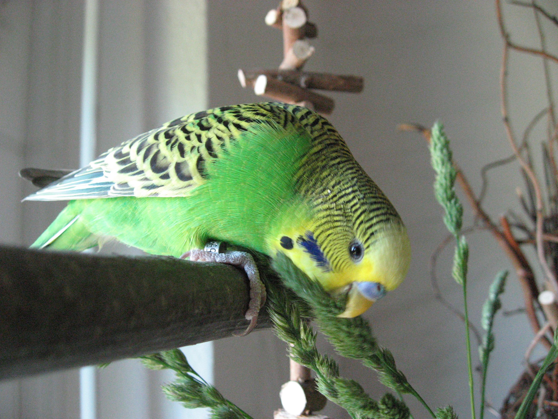 Vogel-TV mit Naschkram