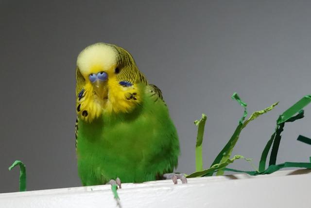Der Vogelscheuchentest