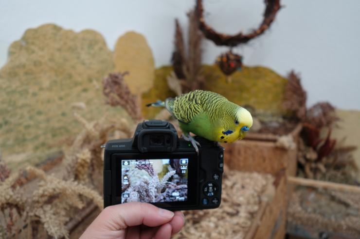 Das neue Paparazzi-Werkzeug