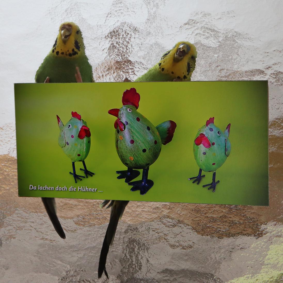 Im Outbäckle lachen nicht nur die Hühner…