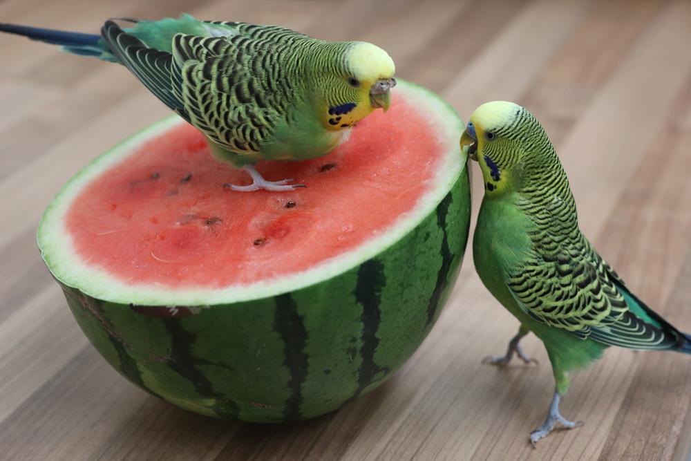 Melonendiebe!